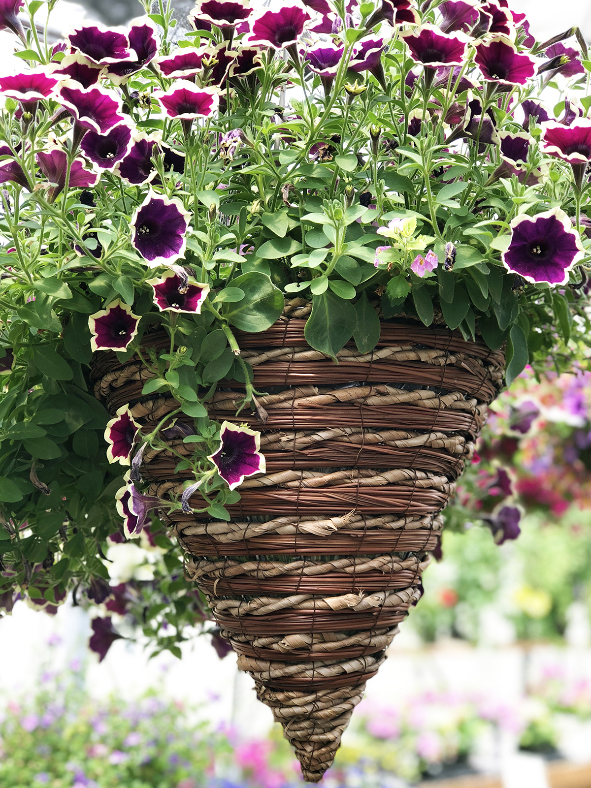 Conical Basket_2